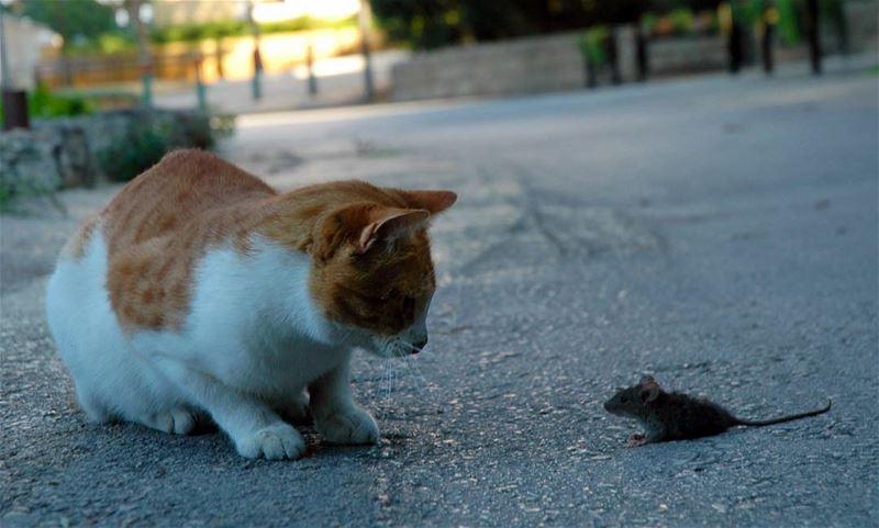 غالباً ما يسود الموقف بعض الهدوء عندما مواجهة الخصوم .. طبعا القطة أكلت ا