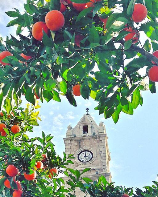 """من الفيحاء، أتمنى لكم يوما"""" تفوح فيه كل عطور النجاح و الصحة و النقاء 😊... (Tripoli, Lebanon)"""