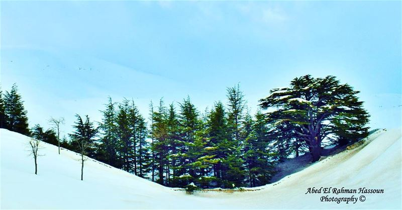 Live Love Cedars | Like my photography Facebook page ╰▶ Abed El Rahman... (Cedars Of Lebanon)
