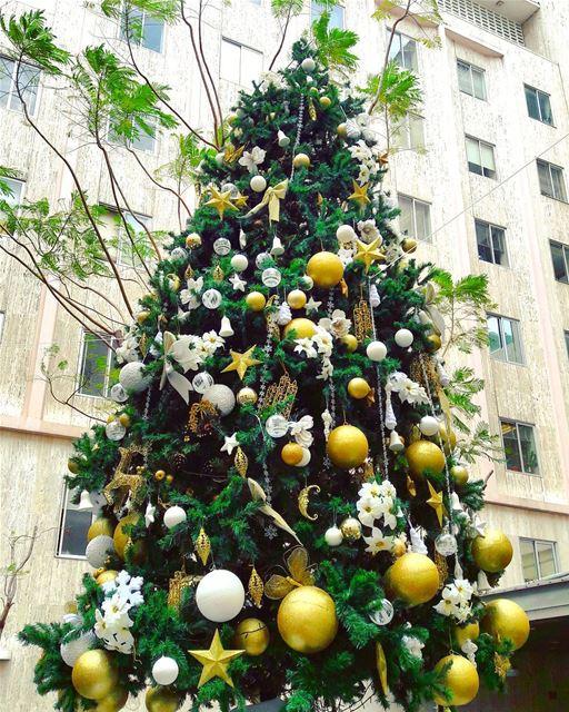 AUBMC's Christmas tree 😍 AUBMC AUB LiveLoveAUB LiveLoveBeirut ... (AUBMC)