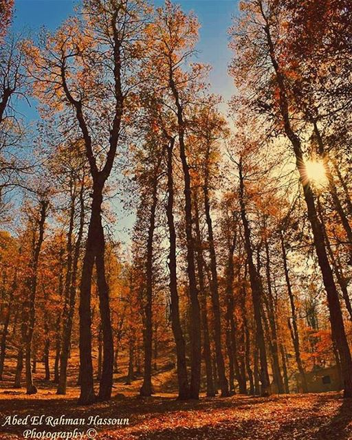 Be like a tree, and let the dead leaves drop.~ Rumi 🍁🍁🍁   Like my... (غابة العزر - فنيدق)
