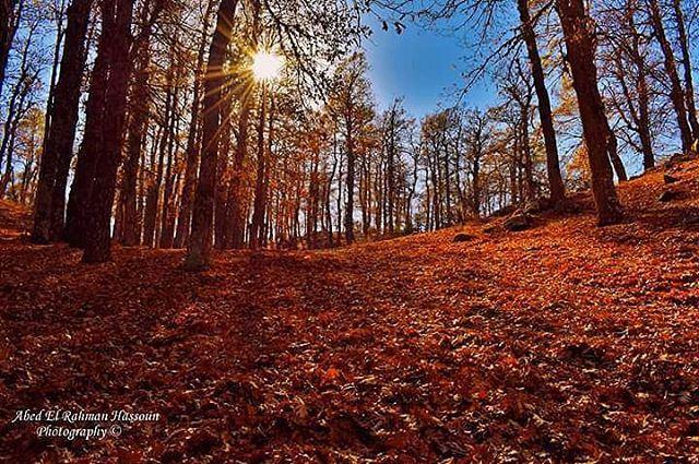 🍂🍂🍂🍁🍁🍁 | Like my photography Facebook page ╰▶ Abed El Rahman Hassoun' (غابة العزر - فنيدق)