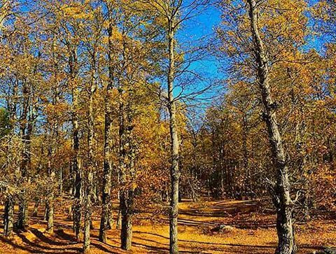 Last leaves of Autumn.... LiveLoveAkkar Akkar AzerForest Forest ... (غابة العزر-القموعة)