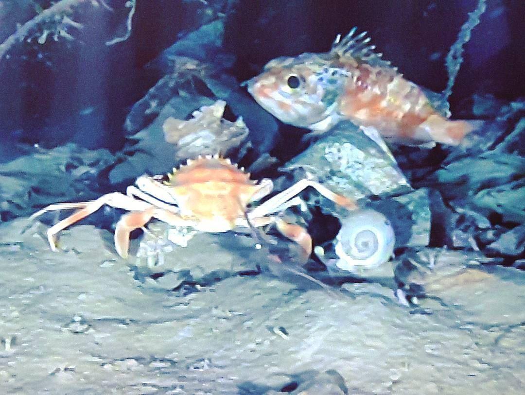 Lebanese marine life Lebanese Wild Animals wildlife Beautiful ...
