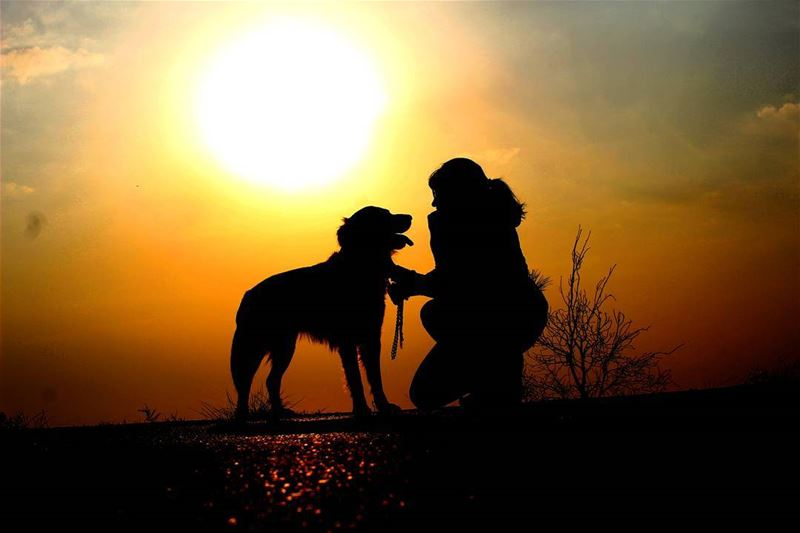 lebanoninapicture lebanonshots dog goldenretriever sunset ... (Al Yarez)