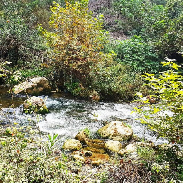 hikingadventure hikingtrail naturelover naturephotography naturebeauty... (Wadi Jhanam)