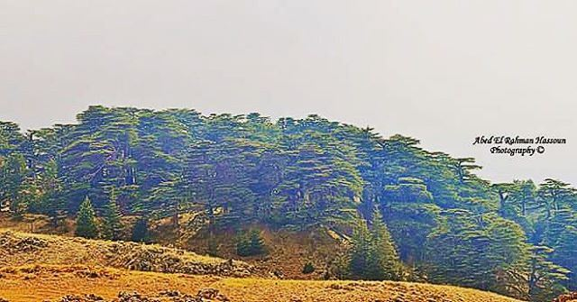 Our Cedars....our pride 🌲 | Join me on Facebook for more pictures ╰▶ Abed... (Cedars Of Lebanon)