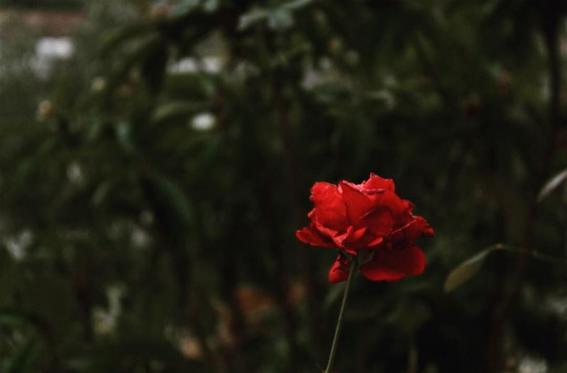 """where Flowers bloom so does Hope."" lebanon Photography Photographers..."