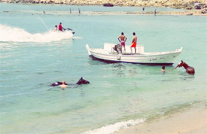 🌊🌊🌊 🐴🐴🐴 LiveLoveWeekends Tripoli TripoliLB Mina Lebanon ... (Tripoli, Lebanon)