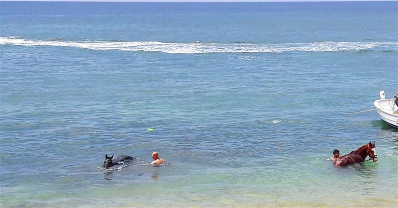 Even horses are enjoying the amazing Mediterranean Sea 🌊🌊🌊 🐴🐴🐴 ... (طرابلس - الميناء)