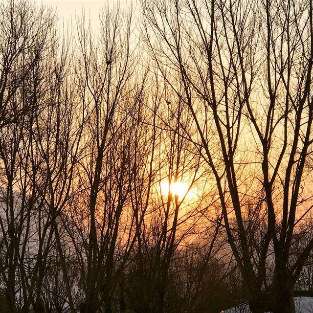 winter snow trees lebanon laklouk sun sunset livelovelebanon... (Shangri-la Laqlouq)