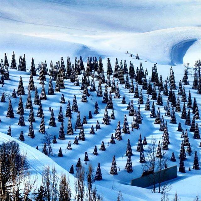 Farmville🌲. laklouk hike snow trees sports outdoors nature ...