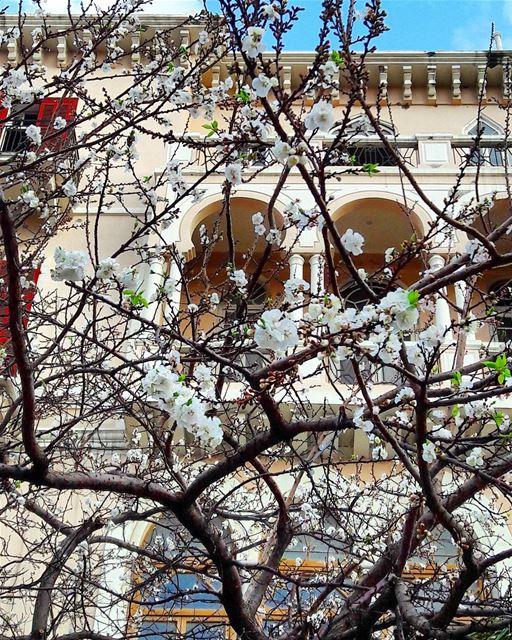 Where flowers bloom, so does hope...Bonjour 🌹🌹🌹 ComeToTripoli ... (التل - طرابلس)