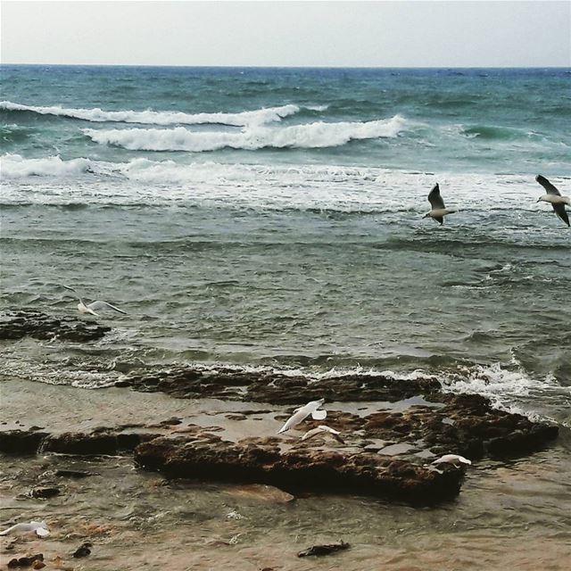 LIVE طرابلس لبنان TripoliLB Tripoli ElMina North_Lebanon Lebanon ... (Corniche El Mina Tripoli)