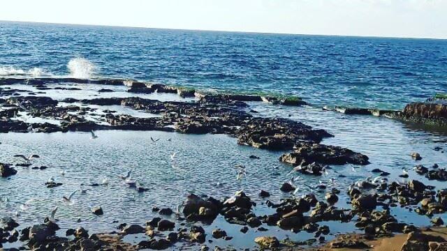 طرابلس لبنان TripoliLB Tripoli ElMina North_Lebanon Lebanon ... (Tripoli, Lebanon)