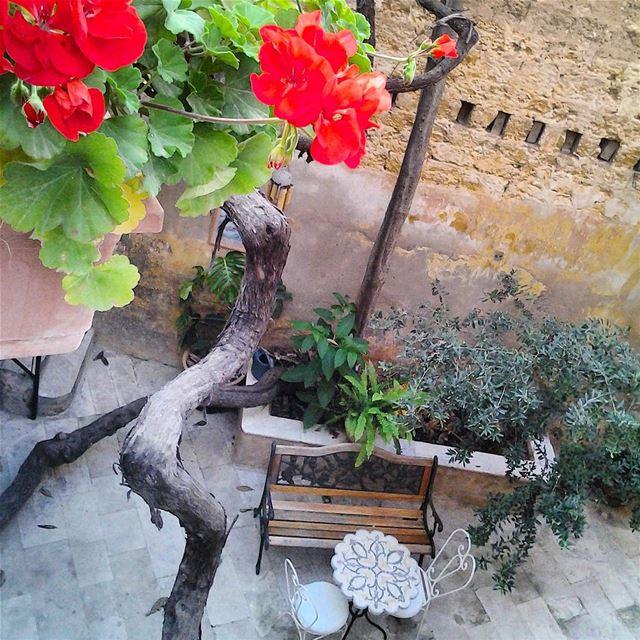 Gooooood morning igers! TripoliLB Tripoli ElMina North_Lebanon ...