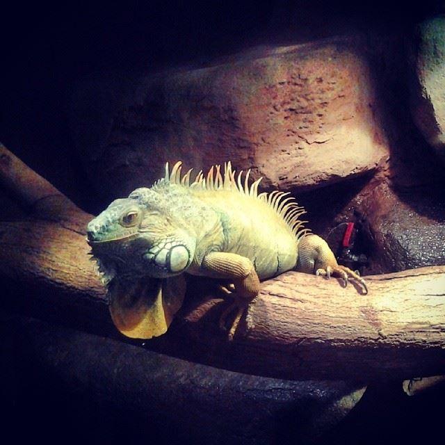 In the KLCC aquarium, Malaysia. Aquarium Klcc igersMalaysia igersKL ...