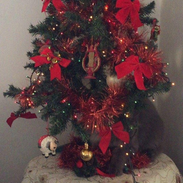 Im a christmastree 😻😸😻 christmas christmastime besttimeoftheyear ...