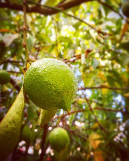 If life gives you lemons, make lemonade 🍋🍋🍋 leo love soul desert ... (Sanayeh Area)