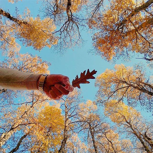 LIVE LOVE AUTUMN 🍂🍂🍂 LiveLoveAkkar Akkar AzerForest Forest ... (غابة العزر-القموعة)