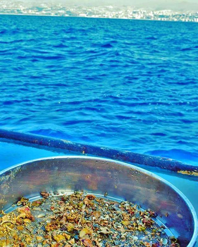 Exploring the deep-sea creatures of Lebanon Lebanese Wild Animals ...