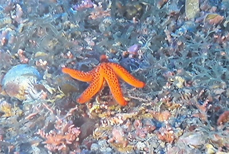 Good morning little Sea Star  Lebanese   Wild  Animals  wildlife ...
