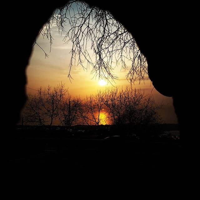 Sunset through a beautiful tree. tourleb tourlebanon lebanoninsta ... (Dmalsa, Mont-Liban, Lebanon)