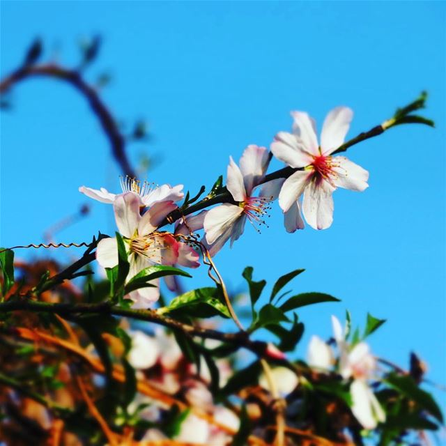 Keep blooming !! Goodmorning bonjour Lebanon Liban nature flower ... (Dalhoun-دلهون)