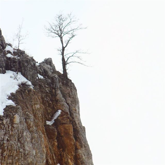 - On the edge - tree edge snow winter stone rock livelovelebanon ...