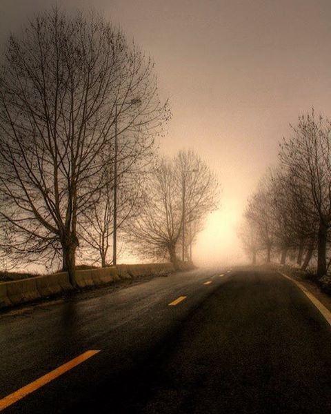 Misty roads driving road roadtrip adventure mist rain trees fog ... (Sawfar, Mont-Liban, Lebanon)