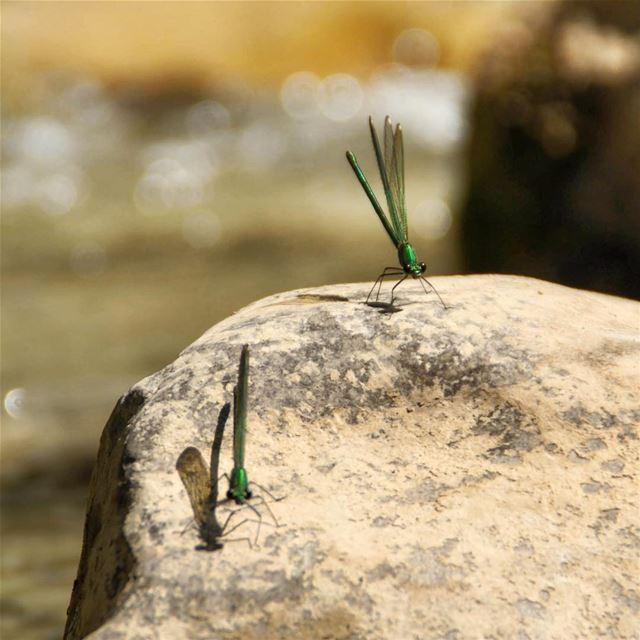 Double trouble.•••••••••••••••••• lebanon keserwan camping hiking ... (Naher Ibrahim - Chuwwen)