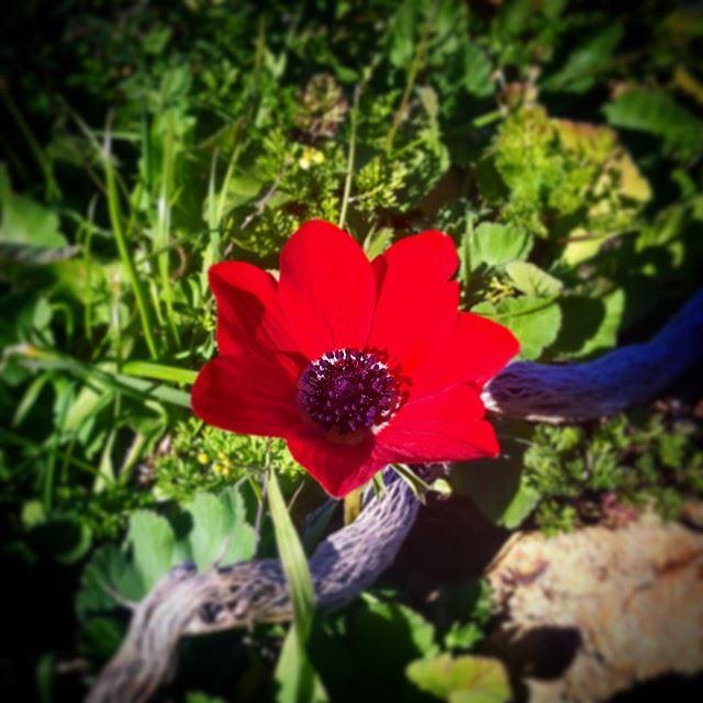 Early spring :) lebanon elchouf maasserbeiteldine wearelebanon ...