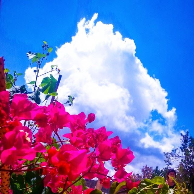 lebanon maasserbeiteldine home garden blue sky sun pink ...