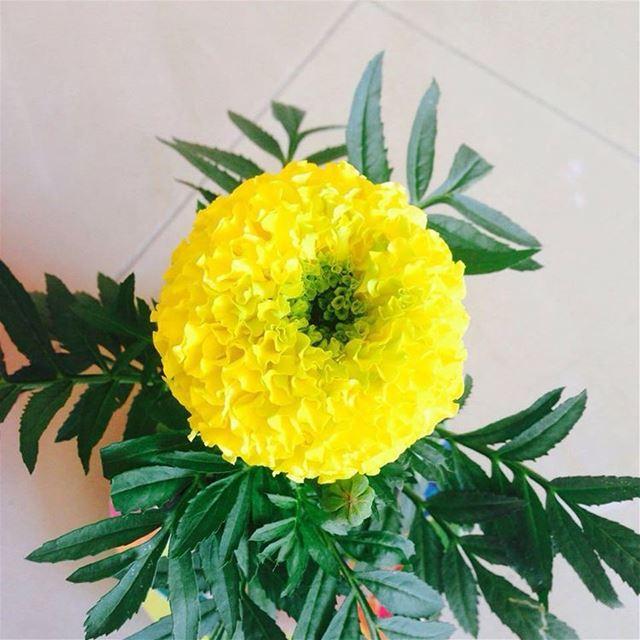 goodmorning bonjour hello august goodbye july yellow roses fleurs jaune...