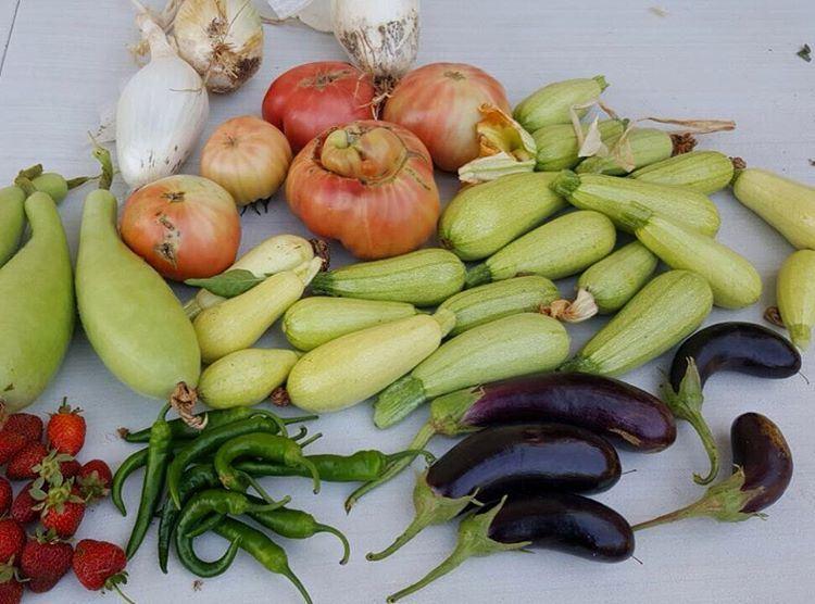 Lebanese Vegetables!