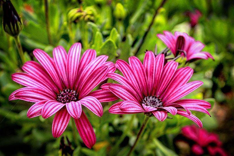 الورد بيفتح بالربيع و من بعدا بيرجع يدبلوانت جمالك ما بيضيع وكل يوم بشوفك...