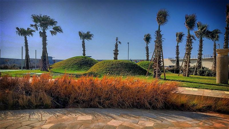 Green Dunes...__________________________ dunes grass green palmtrees...
