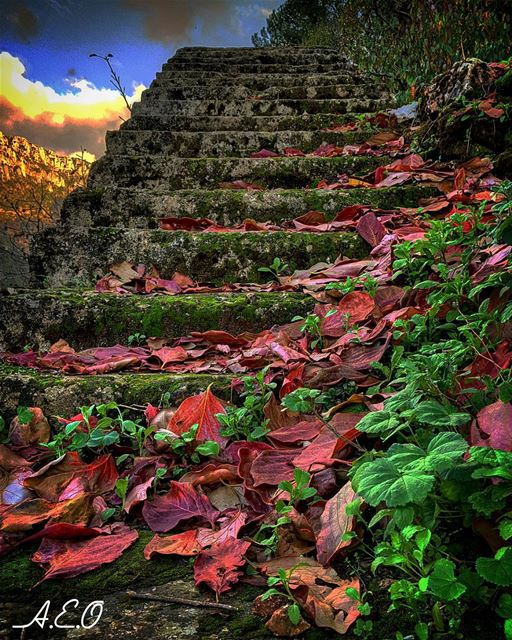 Stairways to Heaven...___________________________ stairs ...