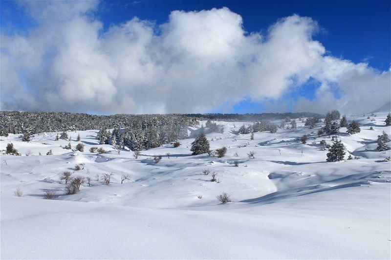 والأرز فوق جبالها حامي شواطيها.... _____________________________ snow ... (Niha, Liban-Nord, Lebanon)