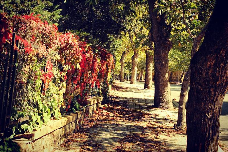 """Colors speak louder than words"". sawfar livelovesawfar livelovelebanon..."
