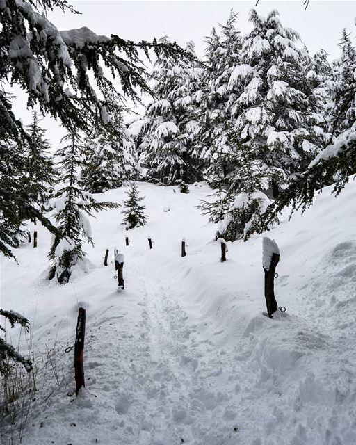 .Snowy hike ! The Cedars of God Bcharre, Lebanon. Good snowy morning dear... (Cedars of God)