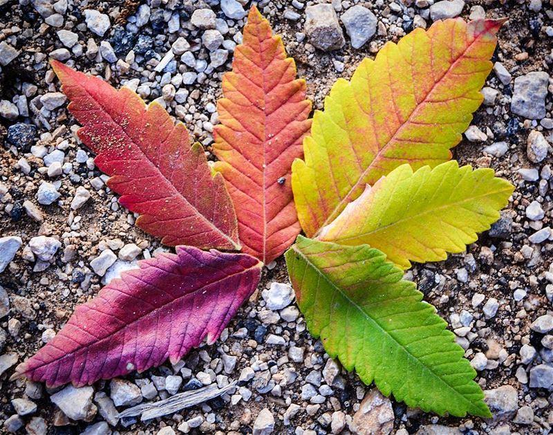 .Fall has a million colours! | Autumn leave rainbow !! | Good evening... (Bâroûk, Mont-Liban, Lebanon)