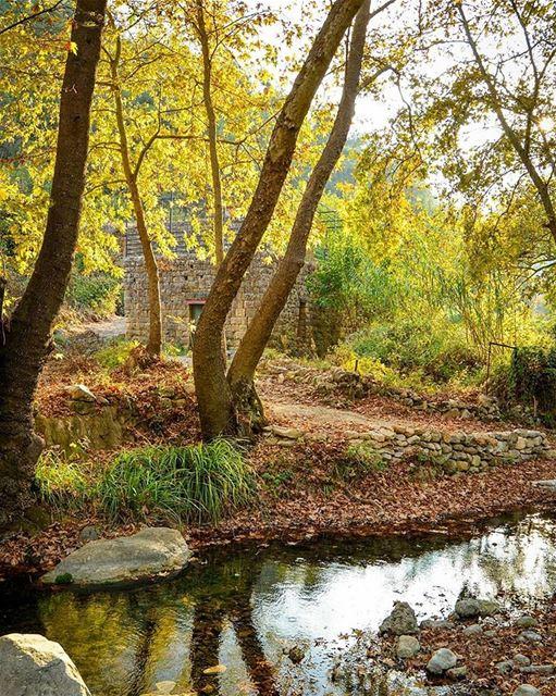 Fantastic Autumn colors 💛🍃🍂🍁. Aanout, Lebanon. Good evening dear... (Aanout, Mont-Liban, Lebanon)