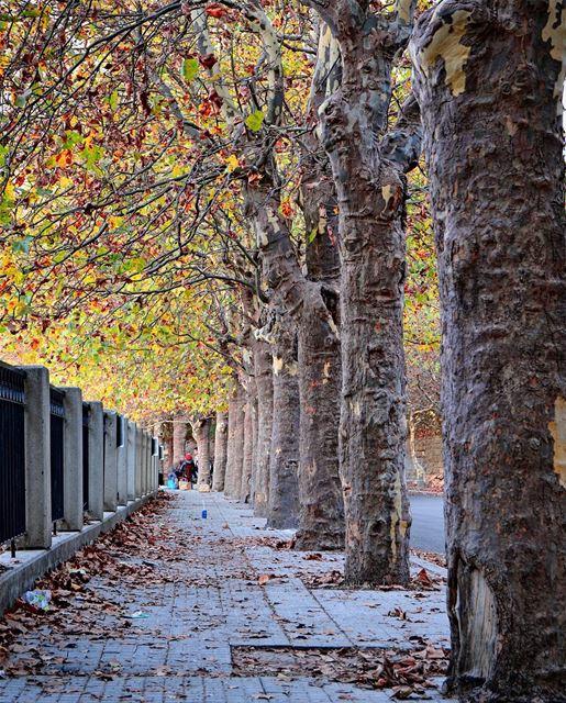 .Beautiful fall colors... 💛🍁🍂🍃! Sawfar, Lebanon. Good night dear... (Sawfar, Mont-Liban, Lebanon)