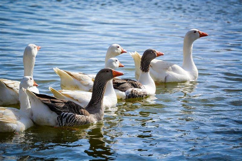 .Good evening dear friends from Taanayel, Bekaa! livelovebekaa ...... (Taanayel Lake)
