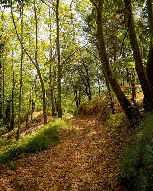 .Good evening dear friends! Found this beautiful forest on my way to Afka! (The Enchanted Forest)