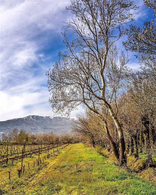 .The Beautiful nature of Taanayel, spring 2016. Good evening dear friends! (Deïr Taanâyel, Béqaa, Lebanon)