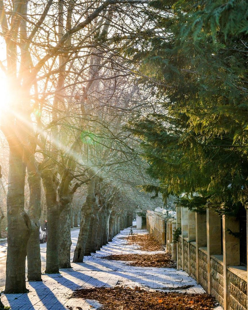 .Good morning dear friends from Sawfar ! Amazing sunshine and trees!! 🍁� (Sawfar, Mont-Liban, Lebanon)