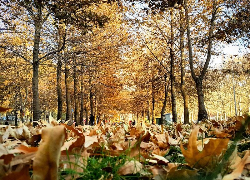 .Good evening dear friends from Baalbek ! Lovely fall still here except...