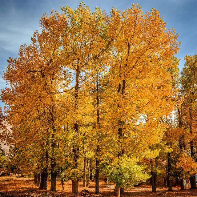 Autumn is Heaven !! Good morning dear friends from Laklouk ...